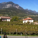 Tramin Vineyards
